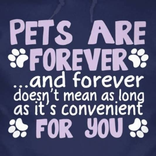 foreverpets
