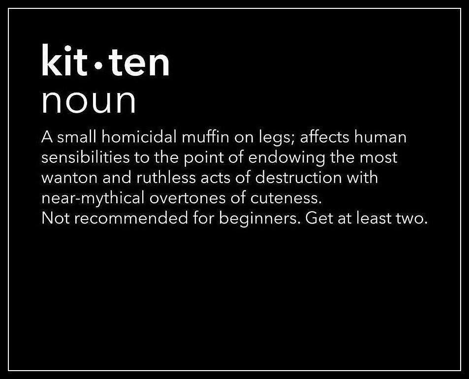 kit ten noun